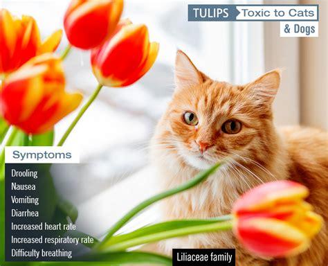 Asplenium toxic to cats