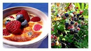 Gratin Fruits Rouges : gratin de fruits rouges eva torocoro ~ Melissatoandfro.com Idées de Décoration