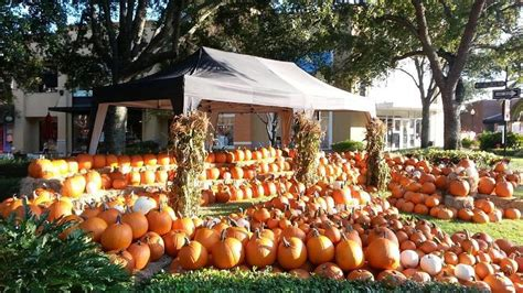 Pumpkin Patch Tampa Fl 33615 by Kick Off Fall In Tampa At The Fall Festival In Hyde Park