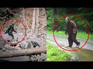 Does Paula Bennett believe in the Yeti as well? – Whale ...