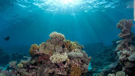 oceans   vital    opinion cnn