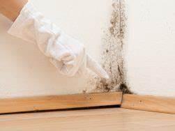 Schimmel Von Der Wand Entfernen : schimmel auf der wand entfernen frisch rein hygienesysteme ~ Watch28wear.com Haus und Dekorationen