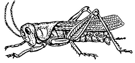 Grasshopper Anatomy Functions