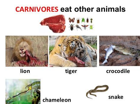 carnivores herbivores omnivores animals carnivore eat examples tiger carnivorous example lion snake animal zebra plants giraffe animales crocodile chameleon comen