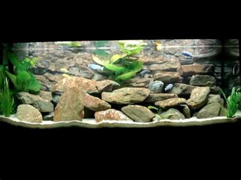 my juwel 400 liter malawi cichlids fishtank how to make do everything