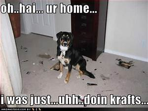 Funny Picture Clip: Funny dogs with captions Funny Dogs ...
