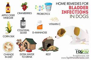 home reme s bladder infections dogs