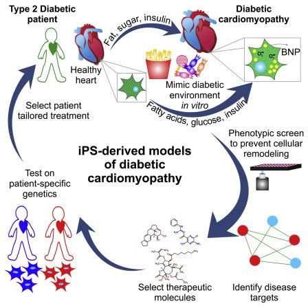 disease modeling  phenotypic drug screening