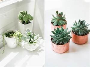 Pot Pour Plante Intérieur : pot pour plante fleurs et jardins maison retraite champfleuri ~ Melissatoandfro.com Idées de Décoration