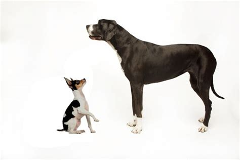 Behavior Differences Between Smaller And Larger Dogs
