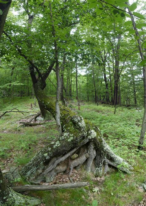 sterling forest trees harriman state park sterling forest state park orange county new york stein s photoblog