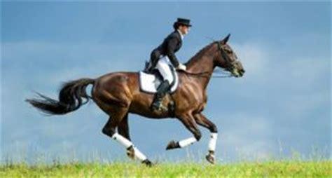warum muskelaufbau beim pferd  wichtig ist