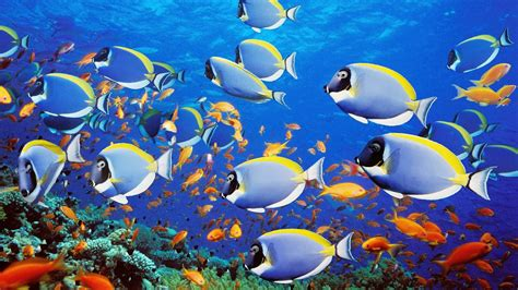 Animated Moving Fish Wallpapers - animated moving fish backgrounds