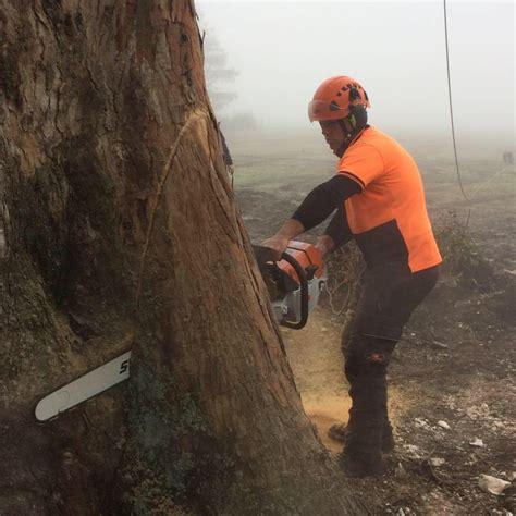 hormann tree trimming home 212 | ?media id=224951257845191