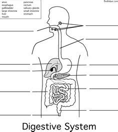 science worksheets for 5th grade free printable digestion