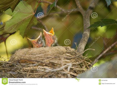 what do baby birds eat baby birds looking to eat royalty free stock photos image 25784338