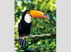 What is Brazil's national bird? Quora