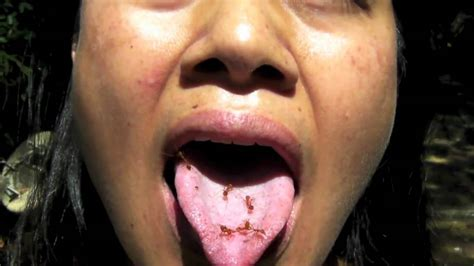 eat ants part 2 beautiful girl eats live ants by the