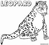 Leopard Coloring Pages Print Animal Colorings sketch template