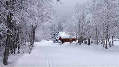 Winter Forest Nature Snow Scenery Wallpapers Desktop