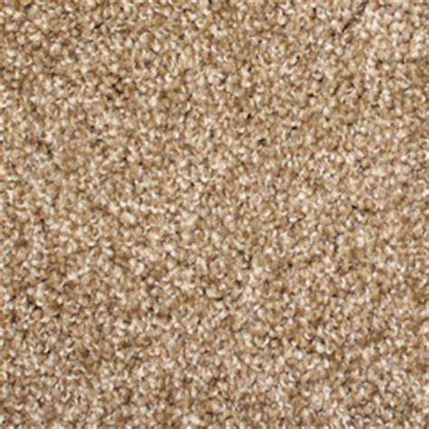 Shop Stainmaster Stock Carpet Brown Textured Indoor Carpet. Accredited Online Technical Colleges. Fixed Deposit Interest Rates. Software Load Balancer Linux. Hair Transplant Neograft Courses For Radiology. Medical Laboratory Scientist Schools. Fort Lauderdale Family Vacation. Wondershare Usb Drive Encryption. Requirements For Business Administration