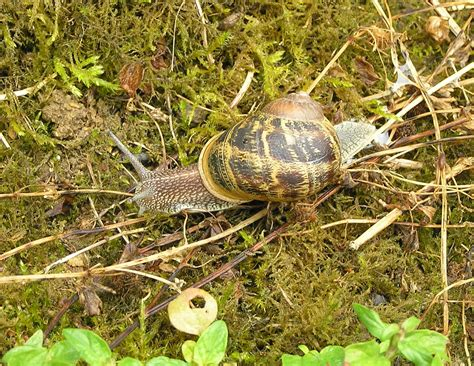 Snails You Can Eat From Your Garden In Poitoucharentes