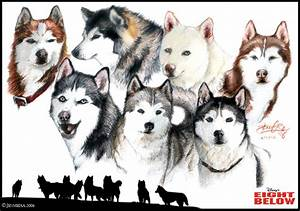The Cast of Eight Below by Lillidan86 on DeviantArt