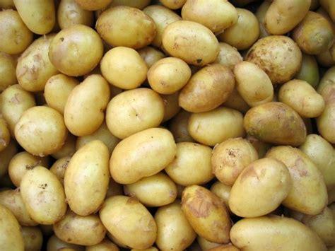 sind kartoffeln gesund kartoffeln kalorien n 228 hrwerte gesundheitsvorteile