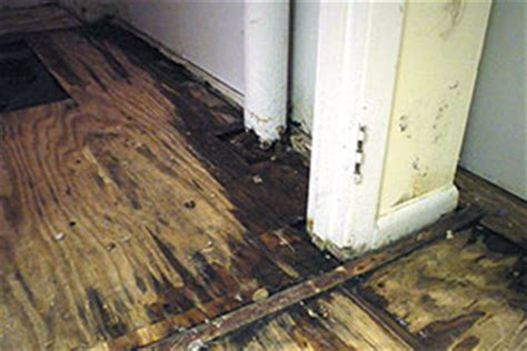 Basement Flooring: Waterproofed & Mold Resistant Basement