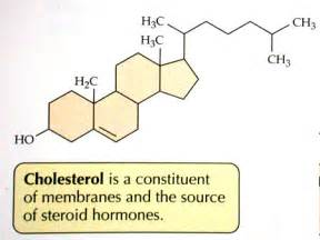 Cholesterol and related lipids Cholesterol
