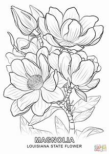 Louisiana State Flower coloring page | Free Printable ...