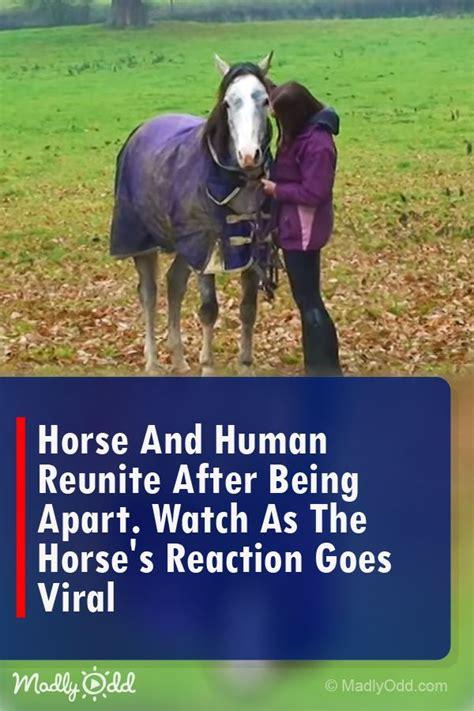 horse between bond animals horses human madlyodd