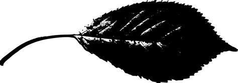 clipart leaf silhouette clipground