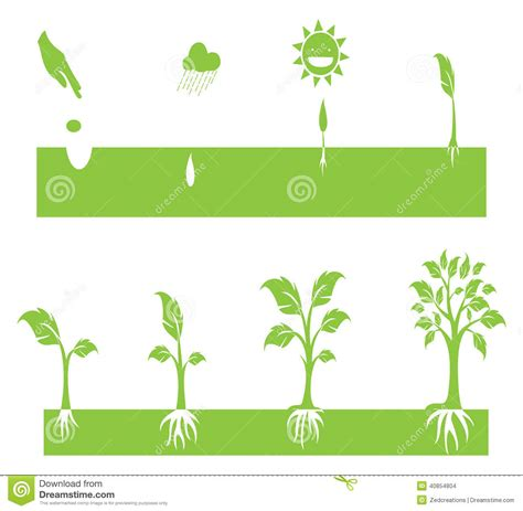 Plant Growing Stock Vector Illustration Of Seeding, Corn 40854804