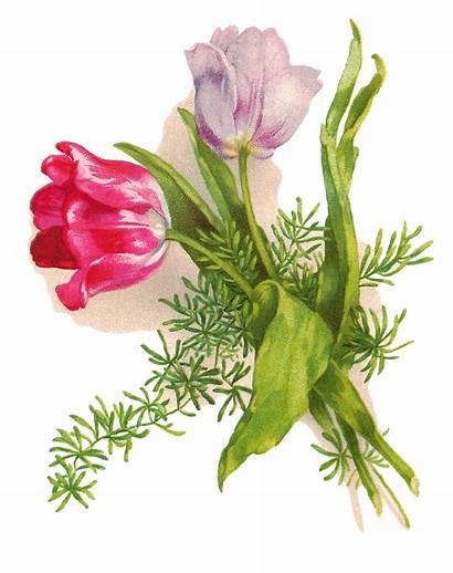 Easter Flower Clipart Flowers Printable Clip Tulips