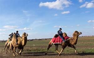 Course De Chameau : la course de chameaux des traditions arabes dans les steppes russes russia beyond fr ~ Medecine-chirurgie-esthetiques.com Avis de Voitures