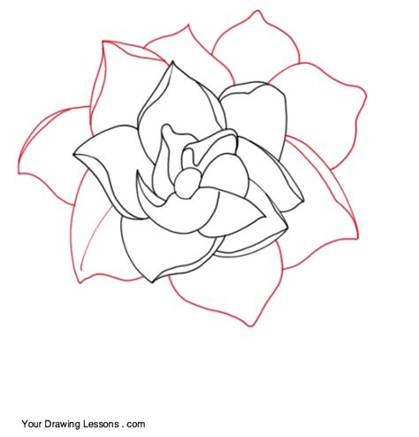 Gardenia Drawing how to draw a gardenia your drawing lessons