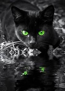 Black Cat. Green Eyes. Photography. | Random