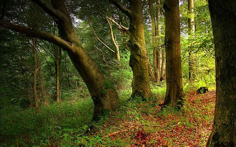 enchanted forest background wallpapersafari