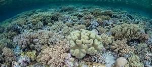 Wakatobi Snorkeling Tour Coral Triangle Adventures