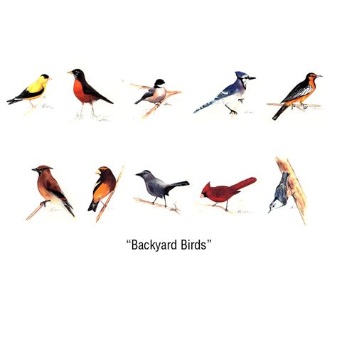 Backyard Birding by Sue Shane Illustrated Notecards