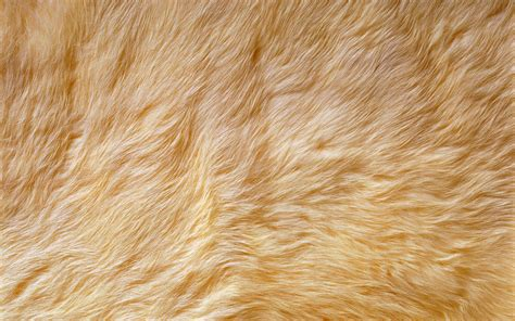 Animal Fur Wallpaper - a collection of backgrounds paterns just take a look