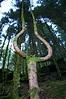 Strange Shapes Of Nature   Weirdomatic