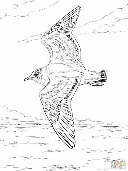Seagull Flying Drawing Seagulls Coloring Gull Pages