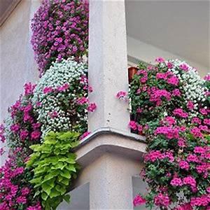Balkonkästen Winterhart Bepflanzen : ber ideen zu balkonk sten bepflanzen auf pinterest ~ Lizthompson.info Haus und Dekorationen