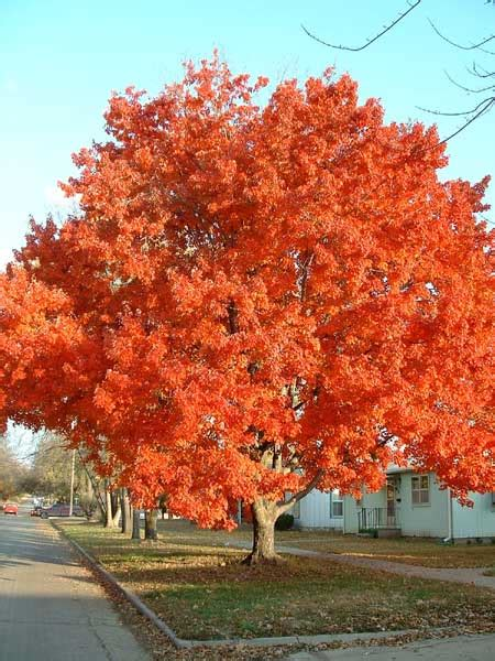 maple tree 301 moved permanently