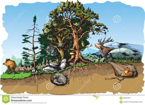 Forest Animals Stock Vector