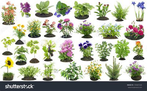 Pflanzen Garten by A Garden Plant Clipart Clipground
