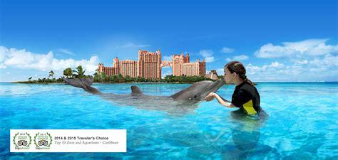 dolphin experience bahamas