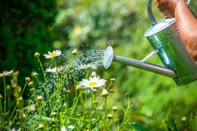 Topfpflanzen Giessen Und Richtig Pflegen by Pflanzen Giessen Was Ist Zu Beachten Saemereien Ch